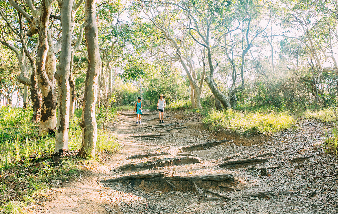 best scenic walking tracks central coast