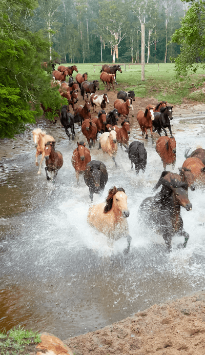 glenworth valley running of the horses