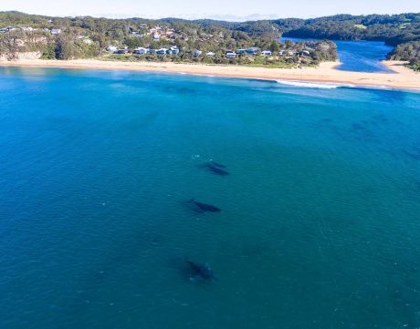 Where to catch a glimpse of the whales on the Central Coast