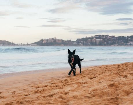 Central Coast's best dog-friendly walks your pooch will love