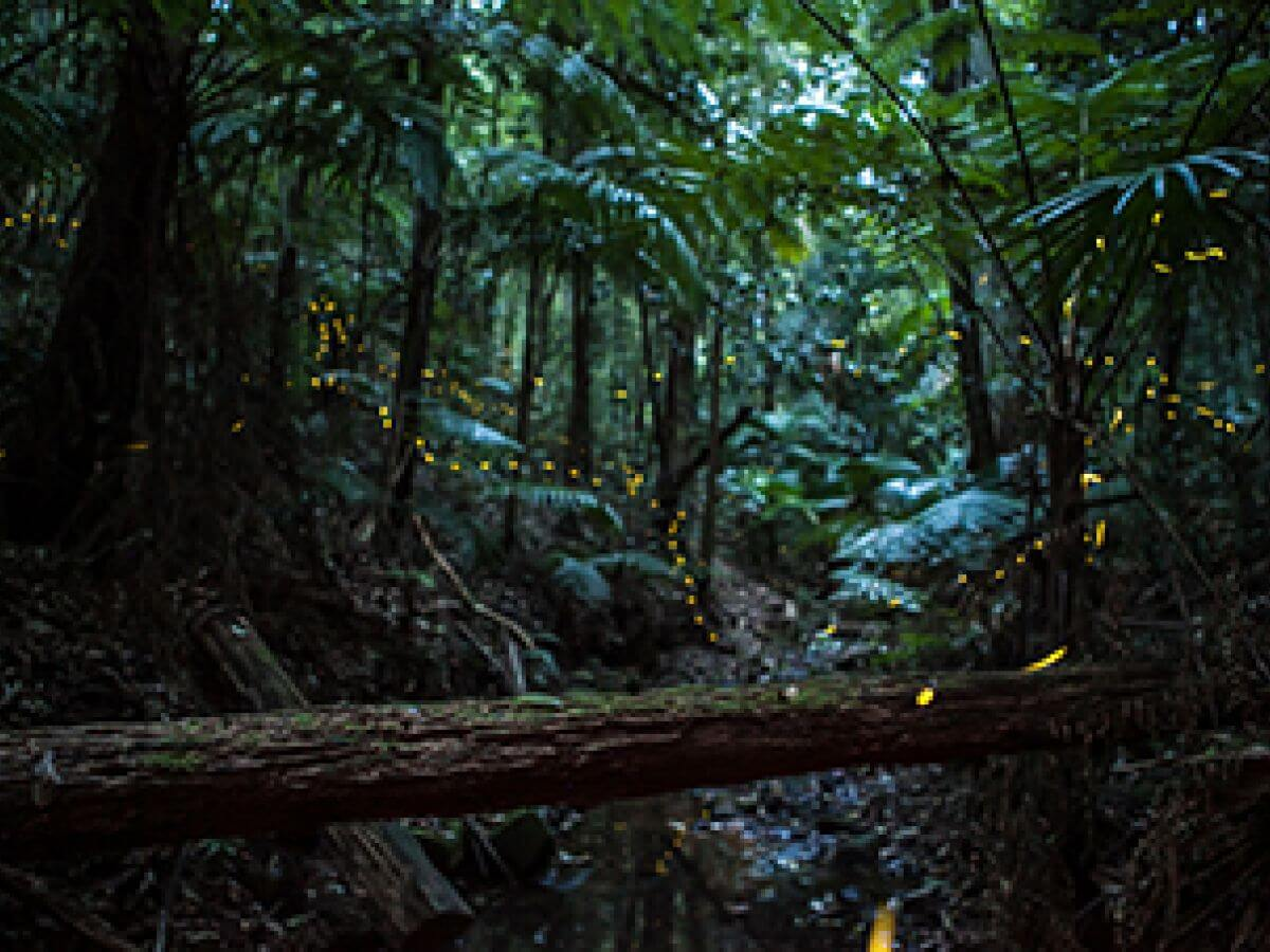 TRANQUILITY-(Newlands-Forest)-web | Photography Tours